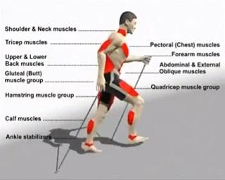 Camminata Nordica: l'esercizio fisico previene la disabilità e allunga le aspettativa di vita.