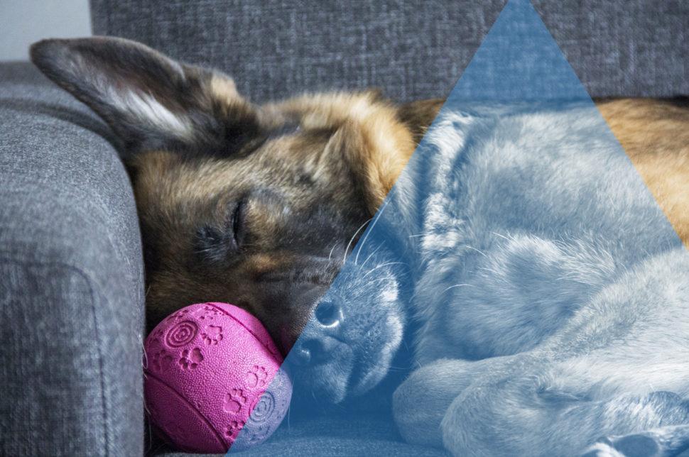 Dimagrire dormendo - HTC Centro Medico